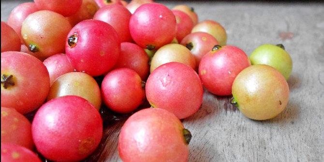 kandungan gizi dalam buah kersen