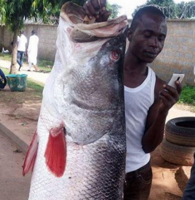 big fish caught fisherman abuja