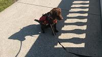 dog job