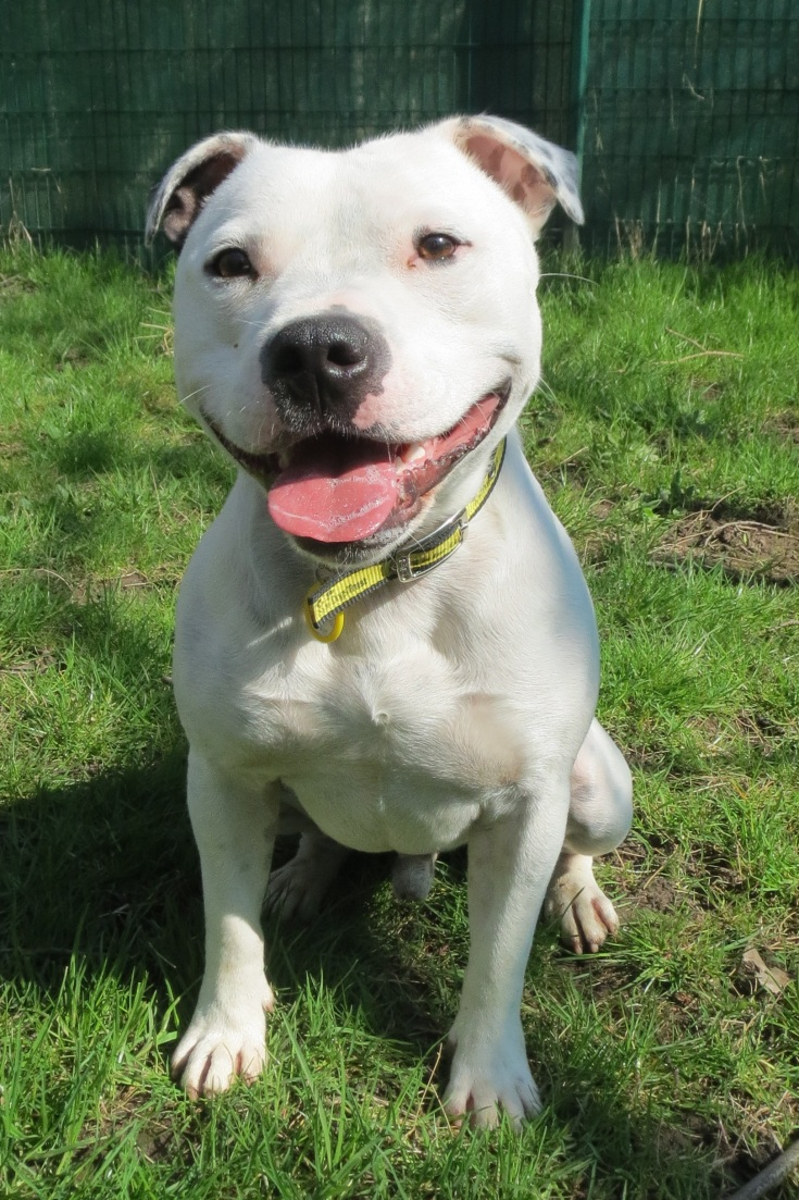 Dogs Trust: Waggy-Tailed West Calder Look-alikes