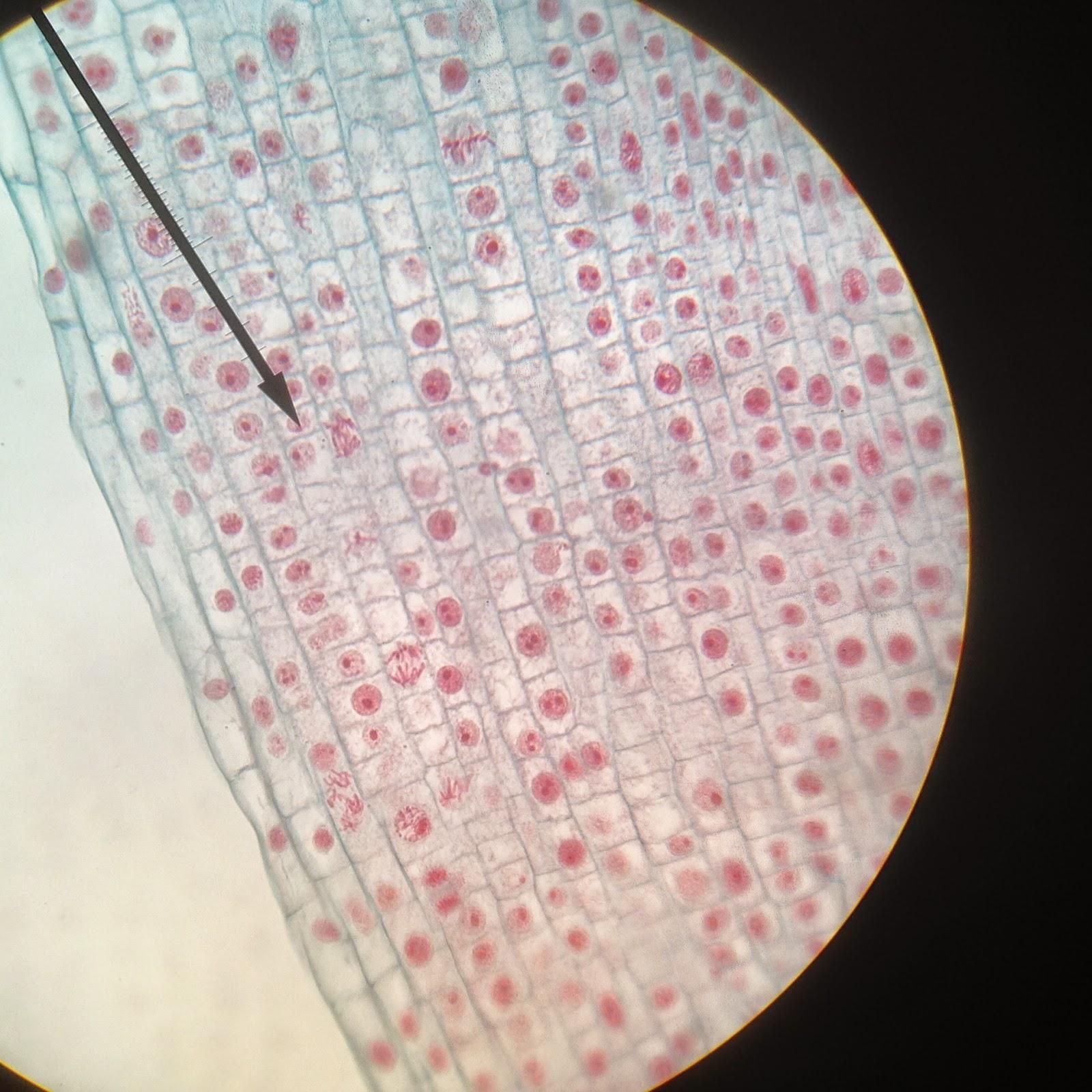 medium resolution of sample 2
