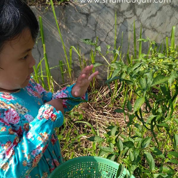 Panen Cabe, Belajar Eksplore Tanaman & Lingkungan Alam Naturalis