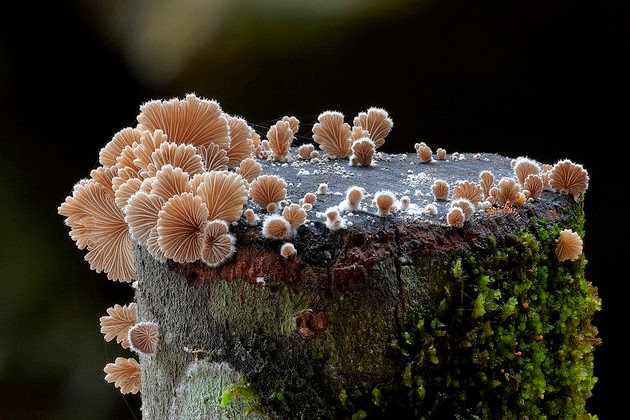 mushrooms and fungi photographed by Steve Axford