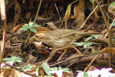 Nandi birds, Nandi fort, nandi hills, bangalore tourism, nandi durga, bangalore hill station, bangalore forest, bangalore wilderness, chikka ballapur, incredible india, bengaluru