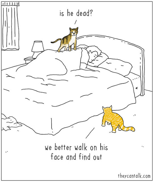 In this image: every cat ever