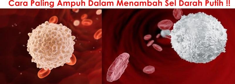 Obat Tradisional Penambah Sel Darah Putih