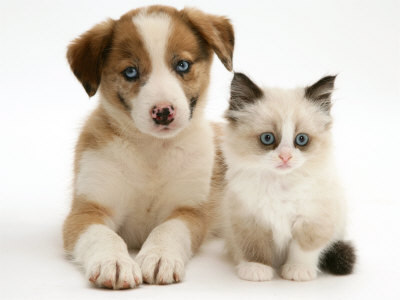 Latest Funny Pictures: Kittens and Puppies