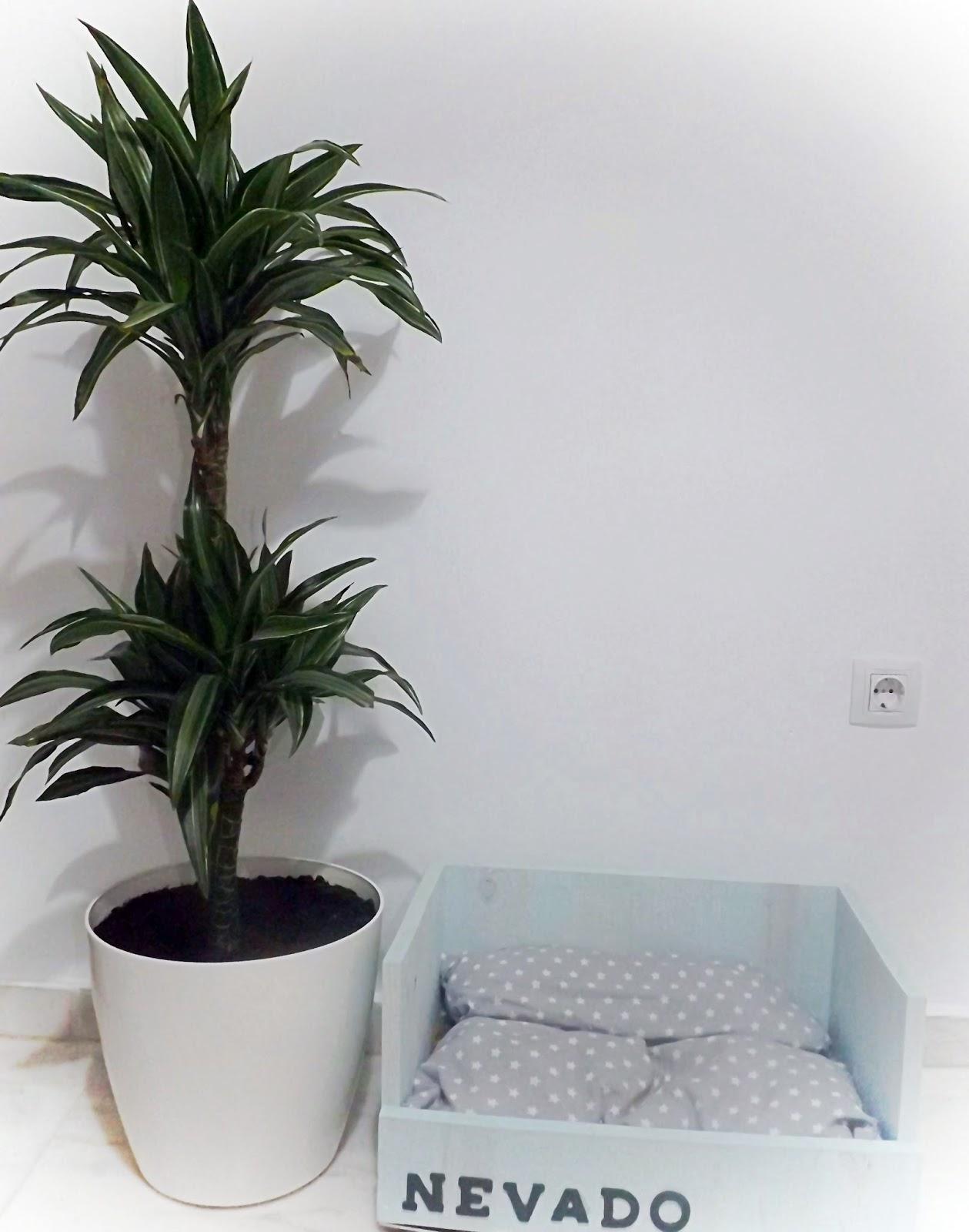 Elemor Ideas Para Decorar Con Plantas