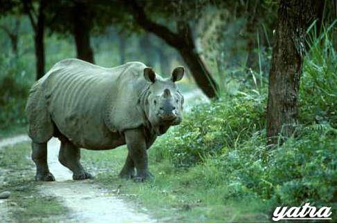 kaziranga national park assam india