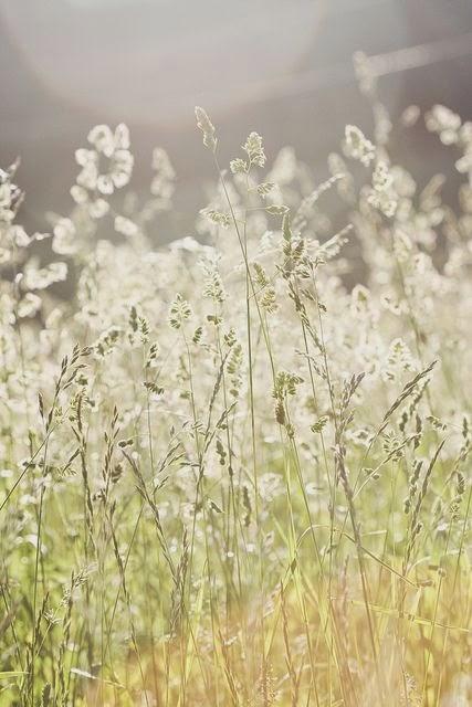 campo-primavera
