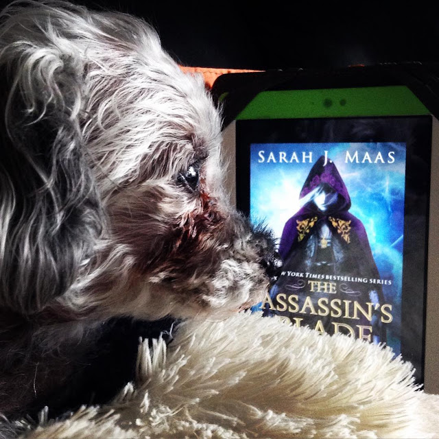 Murchie lies in profile, facing the right side of the screen. Behind him is a white Kobo with The Assassin's Blade's cover on it. The cover features a very pale white woman with white hair. She wears a purple hooded cloak with gold embroidery.