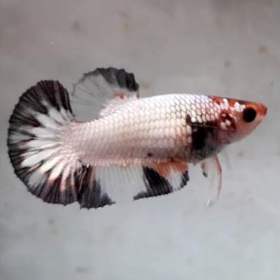 Kisah Inspiratif Seekor Ikan Kecil