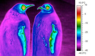 Physique des manchots :gouttes, ondes et comment chiper de la chaleur au froid.