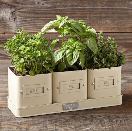 5 Plants for your Herb Garden