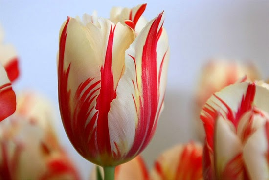 Resultado de imagem para flor mais rara do mundo