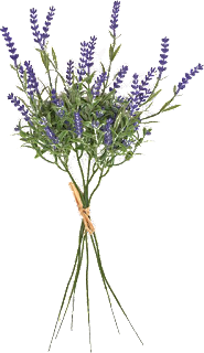 lavanda,plantas,flores,png,recursos,follaje,lila