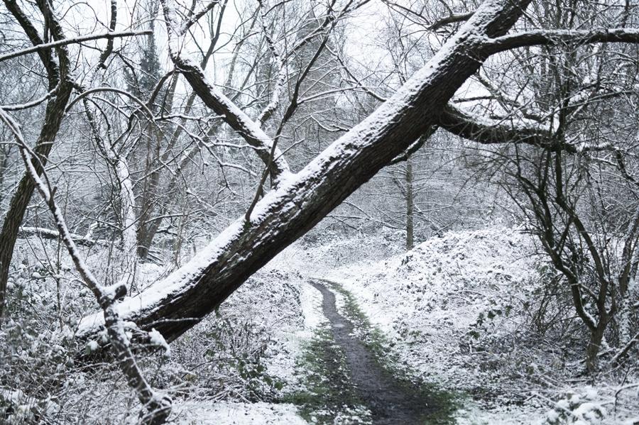 Blog + Fotografie by it's me! - Draussen - Frau Frieda sucht Schnee, umgestürzter Baum mit Schnee