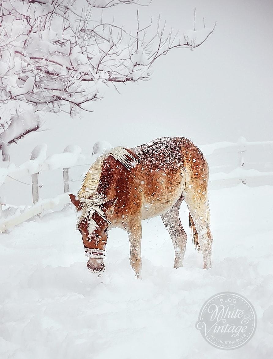Winterbilder:Pferd im Schnee.