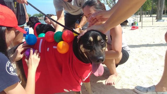 Dog Adoption Drive Singapore