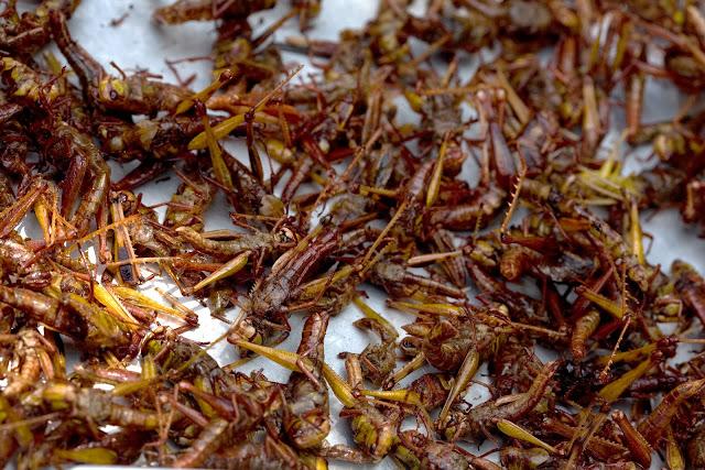 Fried locusts as snacks