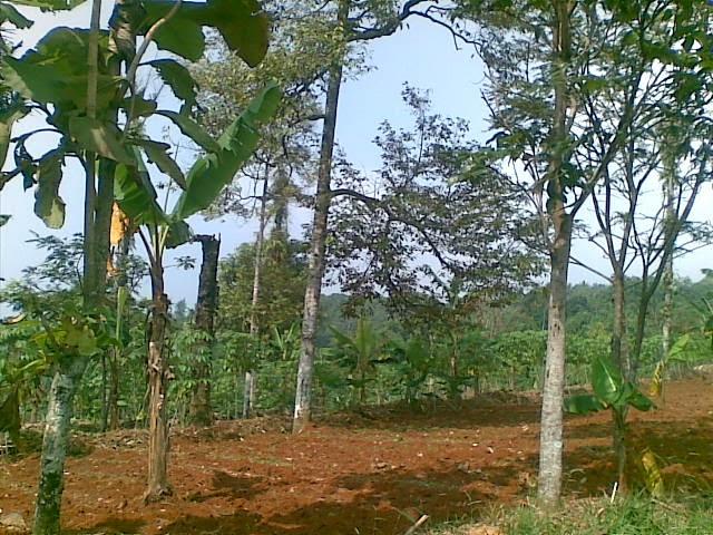 Foto(5085) Jual Tanah | Tanah Di jual, luas 4,25 ha kebun jual tanah di puncak