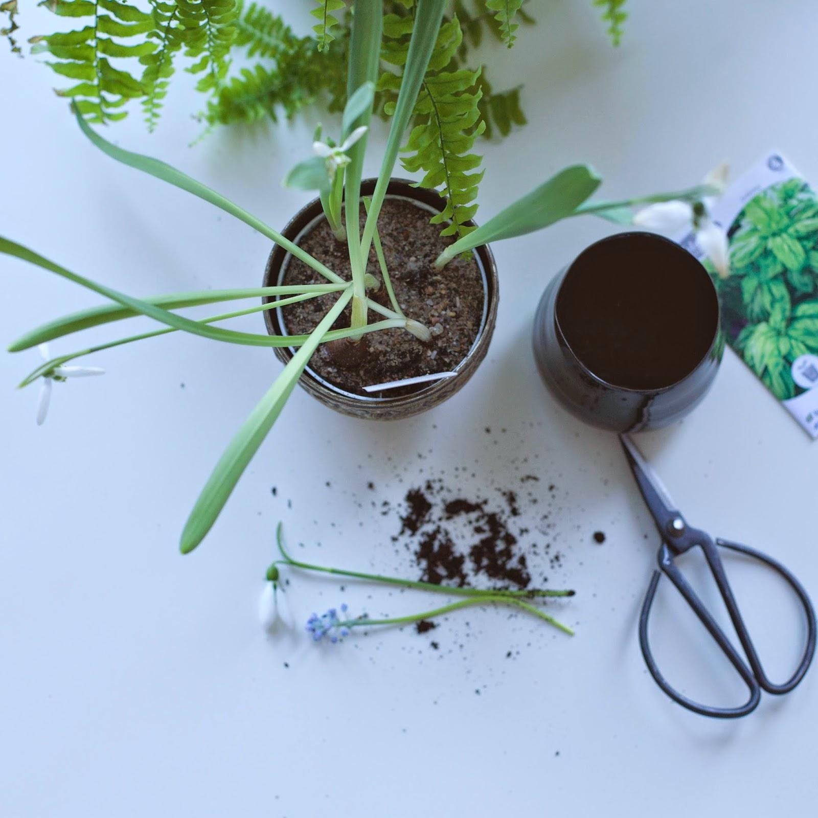 HYGGE - urban garden, Anya Jensen Photography