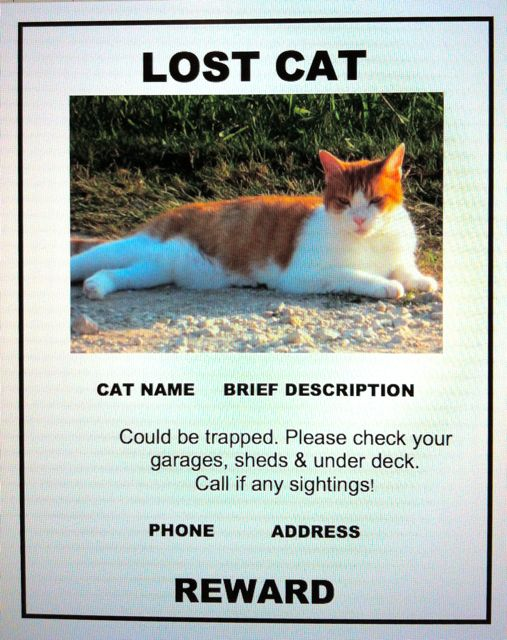 lost cat finder pet detective  lost cat poster example