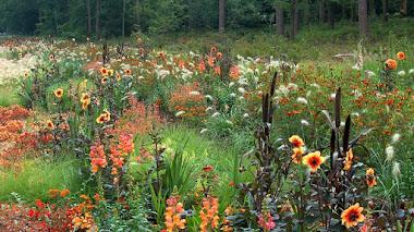 Preparar el verano en primavera plantando bulbos de flor