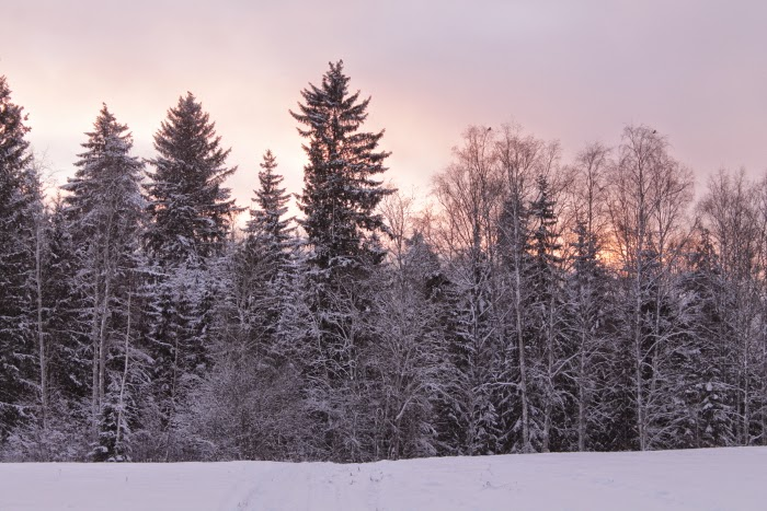 winter in finland - snow - beautiful winter light - photography - snow