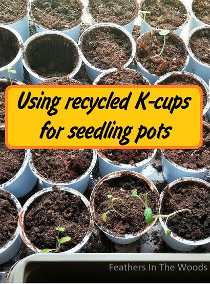 recycled seed starting containers