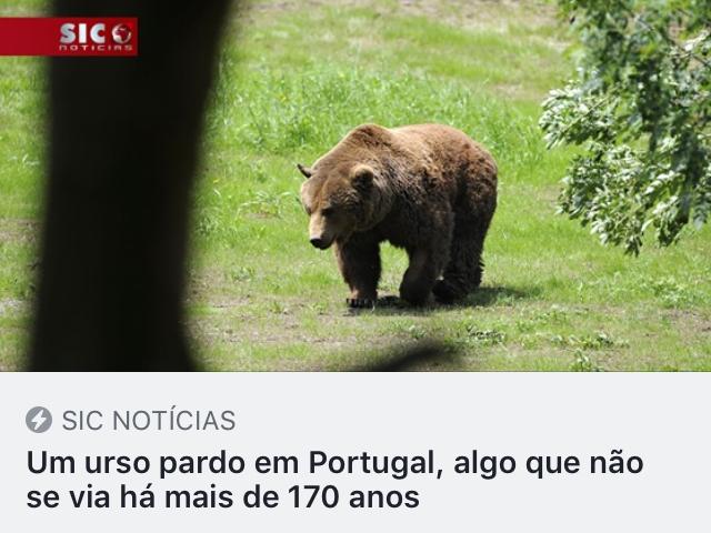 https://sicnoticias.pt/pais/2019-05-08-Um-urso-pardo-em-Portugal-algo-que-nao-se-via-ha-mais-de-170-anos?fbclid=IwAR2Yo8ibDstOTm1U_WbgGox19Zcrfta-Qpbc8jpfwtGTdu_3g1XUIXQNLcA