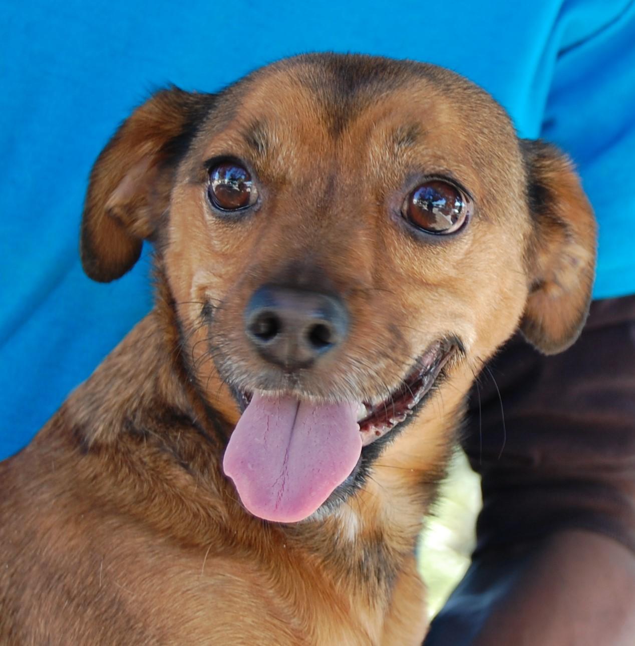 Dog Pound Las Vegas Nevada Nevada Spca Animal Rescue Willoughby