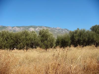 Gerania mountains  Loutraki  Photo - Greeker than the Greeks