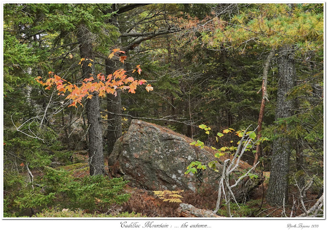 Cadillac Mountain: ... the autumn...