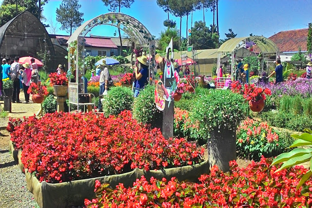 Taman Bunga Begonia - Bandung