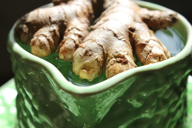 starting organic ginger root in water