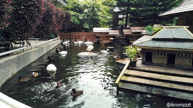 kolam unggas eco green park batu