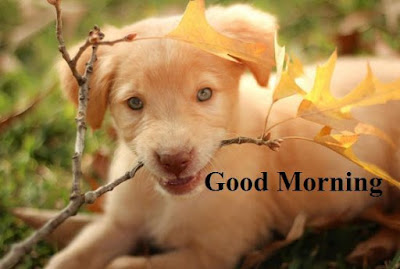 Cute dog good morning images - very cute