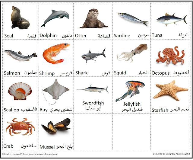 حيوانات وأسماء أسماك البحر