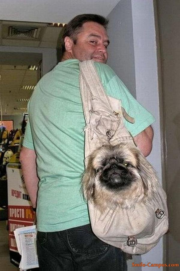 People with Dogs - Funny Pictures