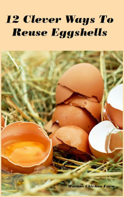 how to | reuse eggshells
