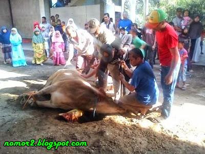 Image Result For Pulsa Murah Di Plumpang