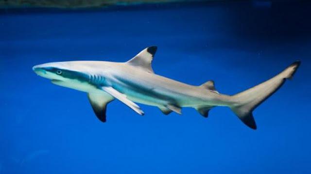 De ce un rechin mort, adus de apă la mal, i-a înfricoşat pe cercetători. Pe corp au descoperit...