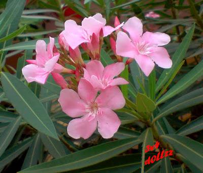 Elegan menawan. Foto Bunga. Natural itu Cantik.