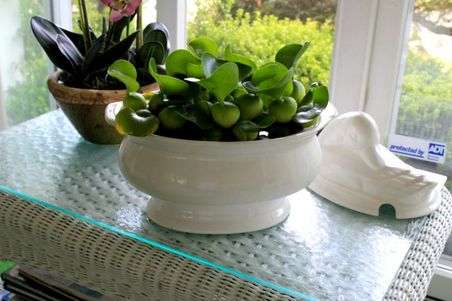 My indoor water garden crafts a la mode anyway any large bowl will make an indoor water garden also workwithnaturefo
