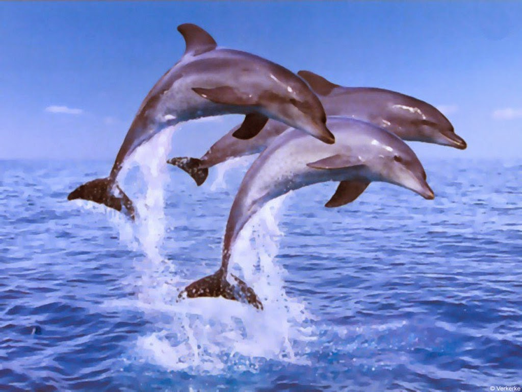 Dolphin to Draw Print Color Cut