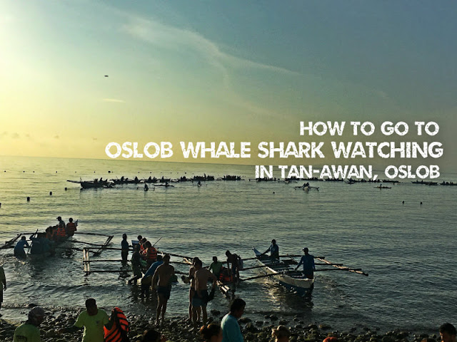 How to go to Oslob Whale Shark Watching in Tan-awan Oslob Cebu