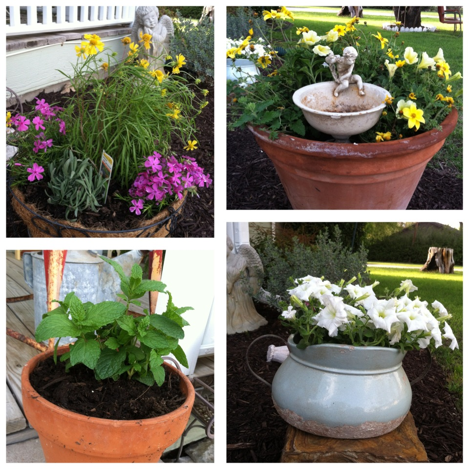 What flowers and herbs to plant in zones 7 through 9 for Choosing plants for landscaping