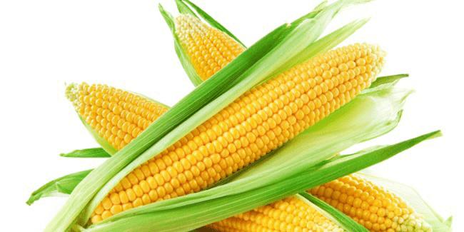 Jagung, sumber karbohidrat Pengganti nasi