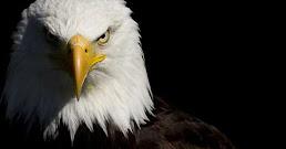 ¿Qué significa soñar con águilas?